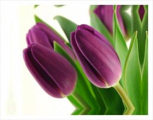 Obraz Styler Tulipany (źródło: www.nomi.pl)