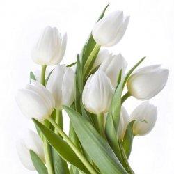 Obraz Tulipany (źródło: nomi.pl)
